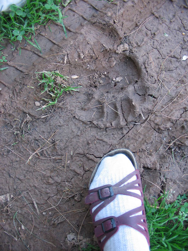 My Mom's foot next to the bear print.